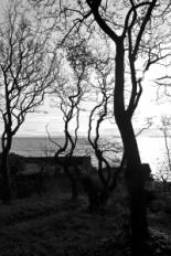 1265726_spooky_trees